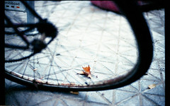 Watching The Wheels (Nina Across the Universe) Tags: espaa sevilla bikes otoo bicicletas