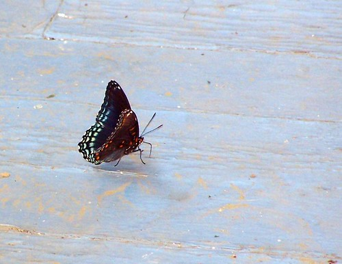 butterfly on front porch by Emilyannamarie