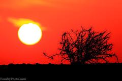 Wild North SunRise (A.alFoudry) Tags: winter orange sun black cold bird me silhouette sunrise canon wow eos big king kuwait usm 2009 ef kuwaiti q8 30d abdullah 400mm عبدالله conceited كويت sabbeya kuw q80 f56l xnuzha alfoudry canon400l الفودري foudryphotocom الصبيه sabbeia كويتيsun