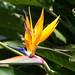Jardín Botánico Lankester_1