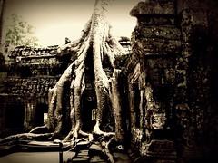 "Cambogia - Febbraio 2011 (anton.it) Tags: 1001nights angkor archeologico cambogia kmer viaggo canong10 antonit 1001nightsmagiccity ringexcellence dblringexcellence ""flickrtravelaward"""