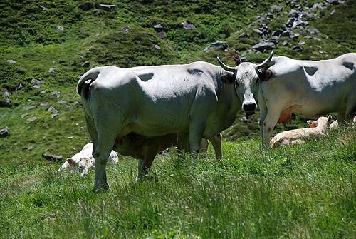 Sur les traces de Trutat : activité pastorale