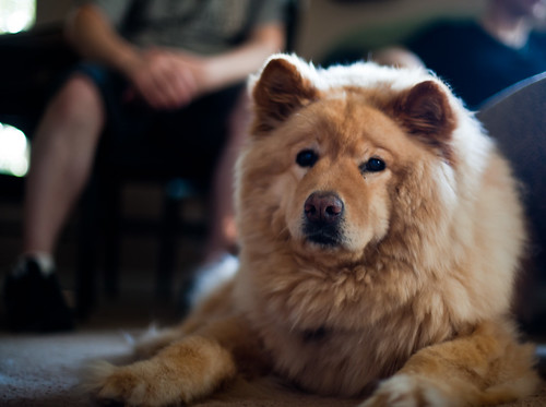 Massive Dog #1