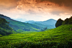 Cameron Highlands (Jim Boud) Tags: travel trees mountains beauty clouds garden lens landscape asia southeastasia tea gardenofeden dramatic tranquility wideangle stormy highland valley malaysia tropical vegetation eden usm lush cameronhighlands efs 1022mm tranquil hdr teaplantation lightroom artisticphotography superwideangle brinchang teaplants teagardens asiapacific photomatix canonefs1022mmf3545 jimboud sungeipalas berincang canoneos60d exposurefusion jamesboud lpvistas sungeipalasteaplantation