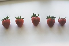 110/365. (kelley f) Tags: shadow red film window leaves fruit 35mm sill minolta strawberries row line 365 windowsill xd5 sooc