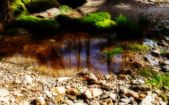 reflejos en el agua (Ariassa) Tags: agua reflejo efectoorton
