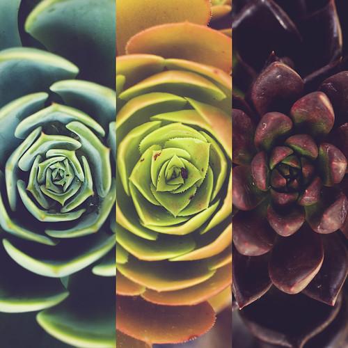 Picture Color #30: Pieces /// the succulent centers