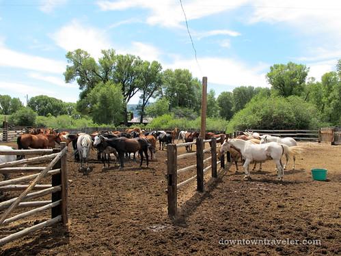 horseback riding at vee bar ranch_1