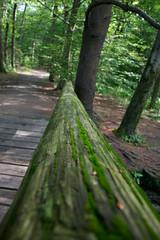 DSC_0037 (eric.king) Tags: wood bridge moss woods lexington willards