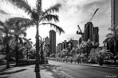 Costa del Este Infrared (Bernai Velarde-Light Seeker) Tags: infrated ir infrarojo bw byn costadeleste panama city central centro america bernai velarde building edifiicio palms palmas hoya rm72irfilter