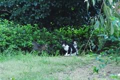 Today's Cat@2016-10-06 (masatsu) Tags: cat thebiggestgroupwithonlycats catspotting pentax mx1