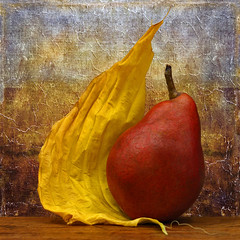 Leaning Toward Autumn (njk1951) Tags: pear stilllife leaf yellowleaf autumnleaf hostaleaf redpear texture squareformat texturebackground red yellow autumnstilllife simplicity season warmcolors