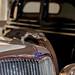 Ford V8 Galgo...