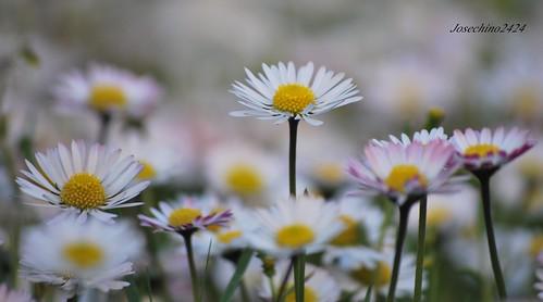 Preludiode la primavera!!!