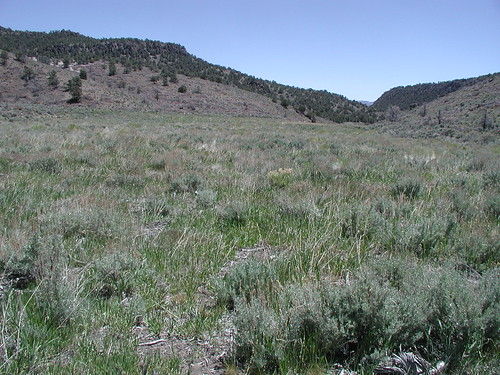Sage-grouse rangeland.