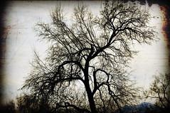 textured tree on 4500 south (houstonryan) Tags: tree print photography utah photo ryan south houston photograph textured based 4500 phtoographer utahn houstonryan