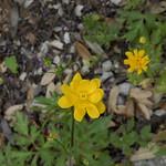 Wildflower_Center_097 thumbnail
