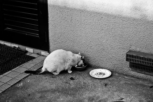 Today's Cat@2011-03-29