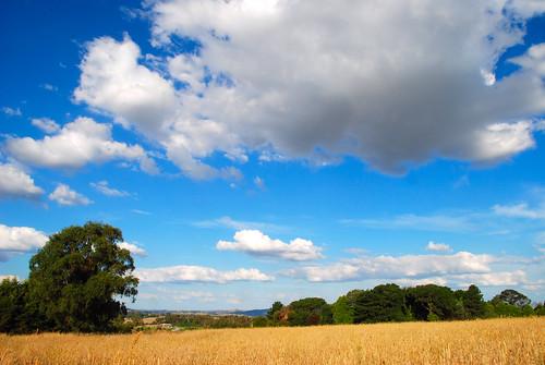 New South Wales Landscape a New South Wales Landscape
