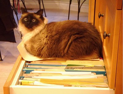 organize_your_cats_09