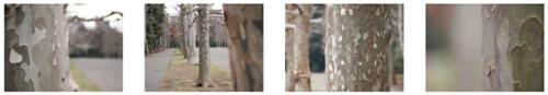 Olympus M.Zuiko 40-150mm plus E-PL1s sample photos