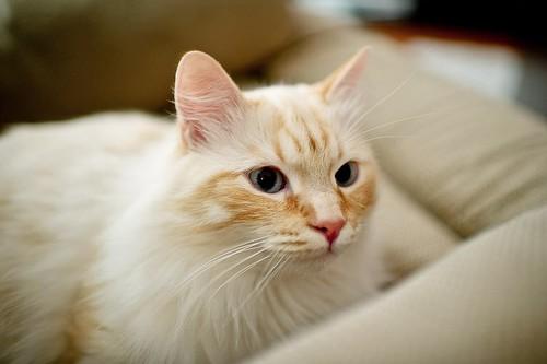 Uchi Cat