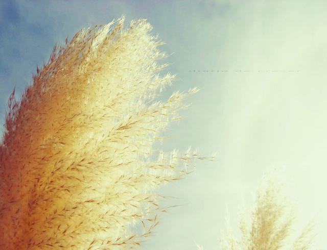 Plumeros al viento