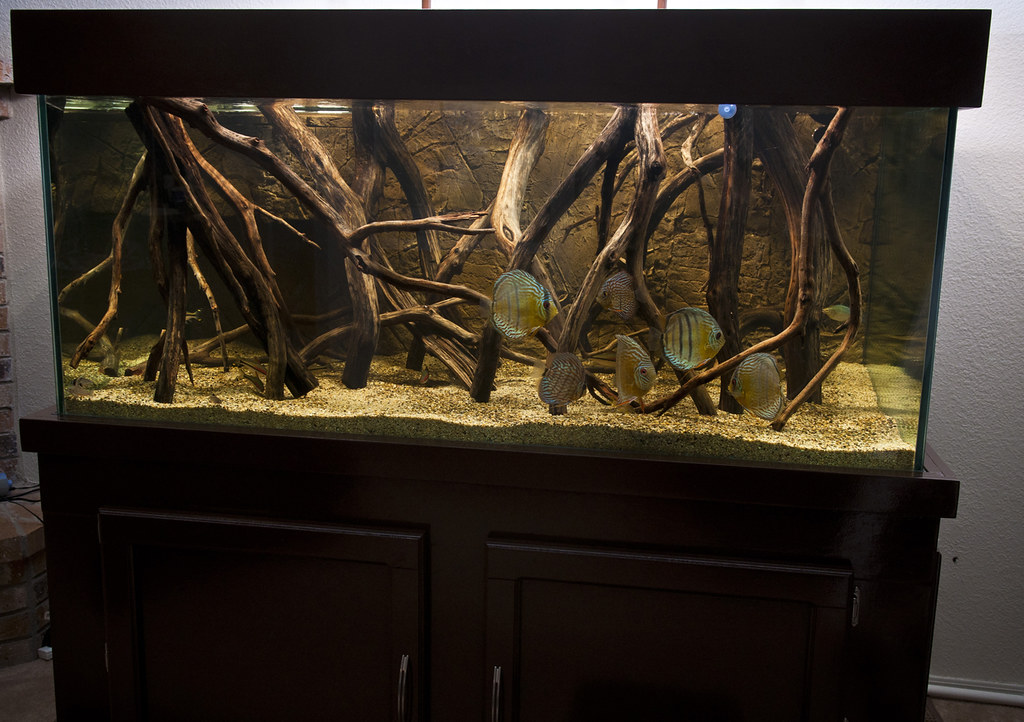 190g Wild Discus Biotope W Led Lighting The Planted