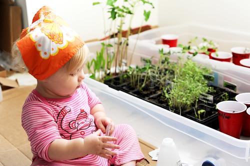 planting2011_2