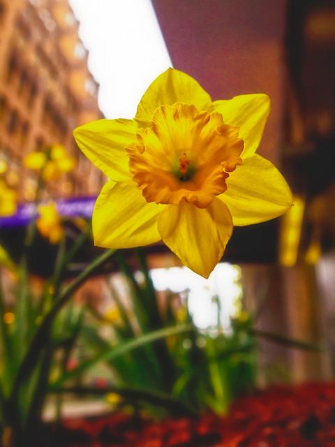 096/365 - April 6, 2011 - In Bloom