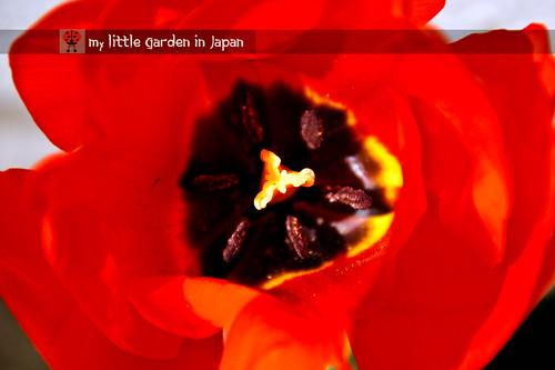 spring-in-tokyo-9