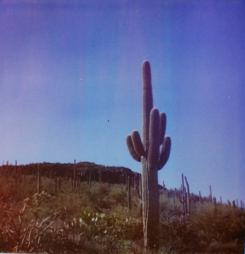cactus pola-0235