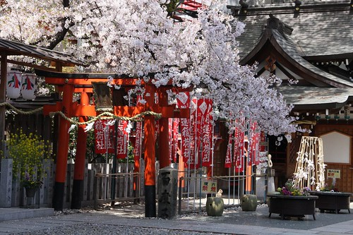 神社の春 / Spring of the Shinto shrine