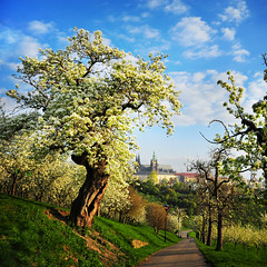 Prague Spring (Edgar Barany) Tags: sun castle nature spring nikon europe czech prague prag praha praga czechrepublic hrad petrin praag ceskarepublika jaro republicacheca mesto barany ceskarepublica 2470mmf28g edgarbarany