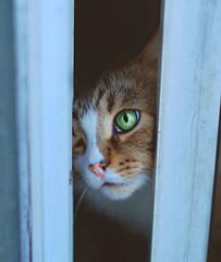 eye opening (Sarah Nieves) Tags: color eye cat feline greeneyes cateyes notmycat