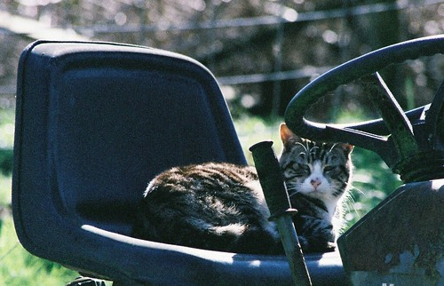 Feral Tabby Cat on Tractor Seat