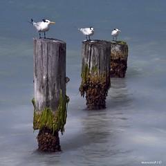 three (manoni81) Tags: seascape birds antigua deepavali innamoramento impressedbeauty oracosm masterclasselite