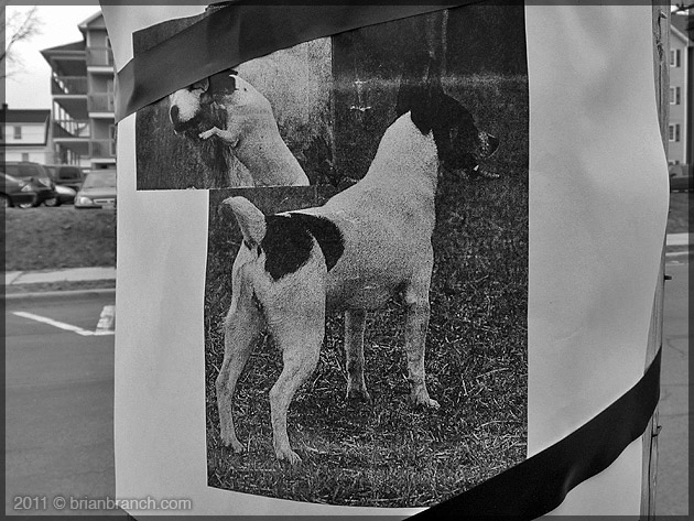 P1140968_lost_dog