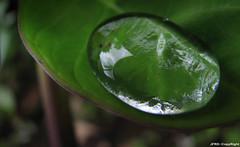 gota de agua II (jfernandorojas) Tags: agua colombia manizales gota caldas manzanares cafetero manzanarescaldas