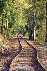 Vanishing Point (Gary Grossman) Tags: oregon train portland landscape vanishingpoint traintracks tracks future unknown vanish possibility mygearandme dblringexcellence tplringexcellence