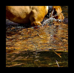 To enter (Magic Theatre [OFF}) Tags: dog water cane play leafs vatten leker lv pentaxk200d