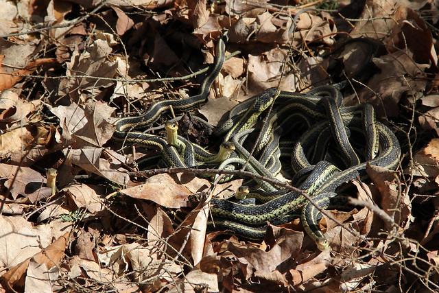 Spring snake pit