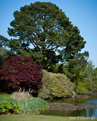 jf_20110430_Sheffield_Park_0040.jpg (Jon Fitton) Tags: park trees england nature sussex sheffield flowersplants sheffieldpark