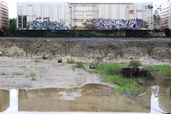 SQUID  VERSUZ (TRUE 2 DEATH) Tags: railroad streetart reflection art train graffiti graf trains railcar squid spraypaint boxcar railways railfan freight lts reefer freighttrain armn kog versuz benching freighttraingraffiti