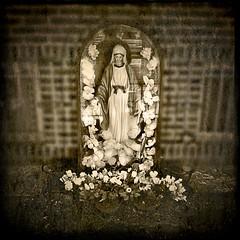 Petals for the Virgin