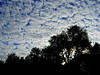 """Mackerel"" Sky? (SHOTbySUSAN) Tags: nyc newyorkcity sky ny newyork clouds susan nimbus manhattan gothamist beautifulclouds cumulous nycparks mackerelsky onlyinnewyork mackeralsky strattus shotbysusan photocontesttnc11 dailynaturetnc11 yahoo:yourpictures=skyline yahoo:yourpictures=storms"
