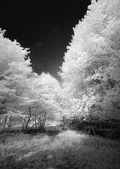 Marshlands Conservancy Infrared (Excaliber2013) Tags: blackandwhite color 20d ir canoneos20d tokina infrared false conservancy falsecolor marshlands 1116 lifepixel marshlandsconservancy 715nm
