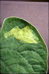Anglų lietuvių žodynas. Žodis genetic mutation reiškia genetinės mutacijos lietuviškai.