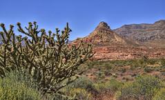 Virgin River Gorge, Arizona (Thad Roan - Bridgepix) Tags: arizona cactus nature landscape utah desert mojave gorge stgeorge virginriver 201105