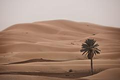 RaidAventura4x4 (L. Granda) Tags: trip travel viaje expedition canon landscape sand desert 4x4 dunes paisaje arena morocco maroc desierto marruecos fwd dunas cheb ergchebbi expedicion 5dii